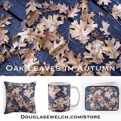 Oak Leaves in Autumn Products from http://ift.tt/1hfrEWq #leaves #fall #autumn #products #home #clothings #arts #crafts #technology (dewelch) Tags: ifttt instagram oak leaves autumn products from httpdouglasewelchcomstore fall home clothings arts crafts technology
