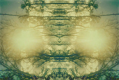 Ascension (Moesko Photography) Tags: trees sun abstract nature sunshine lights outdoor symmetry ambient analogue smena8m