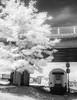 Train (& Tree) (DomiKetu) Tags: trees blackandwhite bw white black tree monochrome station train ir mono blackwhite rail railway panasonic romania infrared sibiu blackwhitephotos tz10