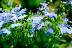 _DSF7073 (ad_n61) Tags: espaa flores primavera bar zaragoza silla fujifilm junio fujinon wr ebc kiosko xf 2016 ois 13556 xt1 18135mm