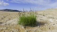 Grass at Hverarond (khybinette) Tags: summer lake art clouds landscape iceland warm desert smoke cook steam smell canon5d eastside myvatn hverarnd studentphotography canonmarkiii vanlol