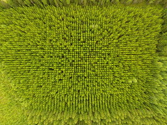 Symmetric forest (JJH90) Tags: forest finland aerial symmetric spruce coniferous planted phantom4 dji