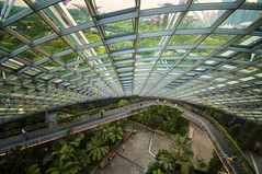 Modern-day gardening (Wajahat Mahmood) Tags: gardensbythebay cloudforest aerial architecture geometry nikond90 lines leadinglines
