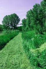 FA_018 (Dutch_Chewbacca) Tags: nature netherlands spring fort sunny dijk brabant 1877 landschap 1880 waterlinie nieuwe 1847 altena brabants hollandse uppel gantel uppelse schanswiel
