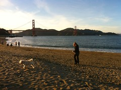 (deleon65) Tags: sanfrancisco sunset beach goldengatebridge poodle photostream crissyfield