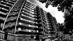 Untitled (Castenada) Tags: belgium kalken horse architecture vlissingen dour fisheye sony hdras30v black white wideangle forest
