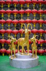 Golden goats in public chinese temple (brize99) Tags: china travel sculpture horse art animal statue festival asian thailand religious happy japanese gold asia sheep symbol bangkok character traditional religion chinese decoration culture goat carving east celebration kanji luck mf zodiac tradition oriental celebrate lunar a7 feng bless element cultural shui 2015 scrupture takumar50148e