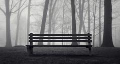 Bench (JeffStewartPhotos) Tags: trees blackandwhite bw kewgardens toronto ontario canada fog bench blackwhite foggy toned walkingwithdavidw