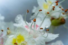 Composizioni di fiori e goccie (XXAquarius) Tags: flowers flower nature eos natura 100mm m fiori pioggia goccie