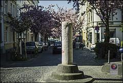 Bonn-Kirschbluete-19 (kurvenalbn) Tags: deutschland bonn pflanzen blumen nordrheinwestfalen frhling kirschbluete
