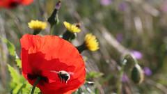 mai 2015 233 (toutenrando) Tags: nature marche chévres vivre marcher respirer randos mai2015