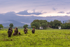 Setting off (rob of rochdale) Tags: morning sky india elephant clouds scenery ngc safari rhino grassland kaziranga robhaich