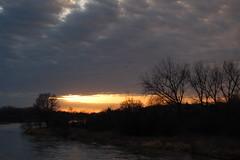 Sunset on the River (Flynn Meier) Tags: sunset birds river outside cranes sandhillcranes migrating