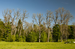 Woods ([Taago]) Tags: wood trees summer wallpaper sky plant tree green nature colors field grass contrast painting landscape happy spring woods colorful estonia colours outdoor feeling saue harjumaa