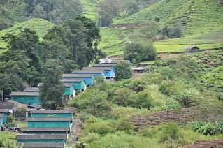 cameron highlands- malaisie 34