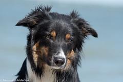 FAN_5710.jpg (Flemming Andersen) Tags: dogs water denmark seaside spring hund dk hurup nykbingmors northdenmarkregion