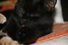 leccalecca (Lina Prema Polmonari) Tags: gatto nero micio tigrato