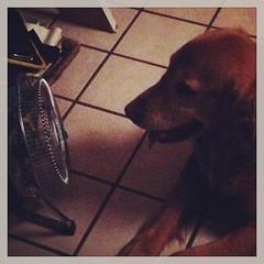 Como cuando te mueres de calor y el mejor lugar de la casa es justo frente al ventilador... #pet #dog (Alejandra) Tags: instagramapp square squareformat iphoneography uploaded:by=instagram rise