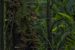 Surreal (Evandro Badin) Tags: cogumelo mata mataatlantica