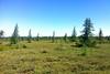 GUEJ_2016-07-03_10-49-50 (jsguenette) Tags: landscape paysage bog tourbière