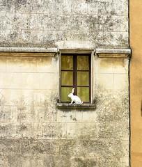 White Rabbit, Aups, Var, Provence, France (Hunky Punk) Tags: dwwg town village window sill ledge white rabbit aups provence var provencealpescotedazur france