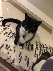 Tue, Jun 7th, 2016 Lost Male Cat - Sion Hill Road, Drumcondra, Dublin (Lost and Found Pets Ireland) Tags: road dublin june cat lost hill sion 2016 lostcatsionhillroaddublin
