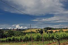ER 160608 (17) (Paolo Bonassin) Tags: italy field vineyards rows campo emiliaromagna vigneti filari zolapredosa ponteronca ponteroncaviacarducci