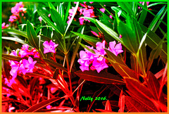 *Laurel... (MONKEY50) Tags: pink red plant flower macro green nature colors psp purple soe hypothetical musictomyeyes nicon autofocus gidital artdigital greenscene shockofthenew flickraward awardtree nikonflickraward contactgroups exoticimage netartii