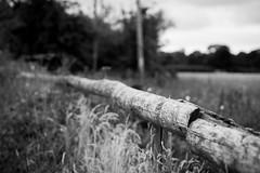 Dickens Heath Walk (Alex Matravers) Tags: dickens heath solihull sony s7 amateur canon 50mm fd wide landscape greenary countryside grey greyscale mono black white trees wood branch