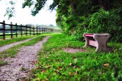 At choice -   (Igor Danilov) Tags: summer fence way relax soft walk seat july stop rest nikondslr nikond90