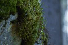 Moss-mjuk (lena.fredin) Tags: mjuk fotosöndag fs150418