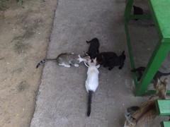 living cross (Lucian Ionita) Tags: pet cats nokia cross n95