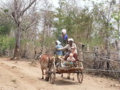 Oxcart ride back to village