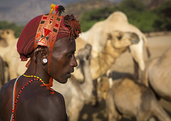 Rendille Tribesman With His Camels, Marsabit District, Ngurunit, Kenya (Eric Lafforgue) Tags: africa shirtless portrait people beauty horizontal closeup outdoors person photography necklace day desert adult kenya african profile earring pride tribal headshot jewellery adventure camel human heat warrior ornate tribe moran hairstyle livestock herd samburu cultures beautifulpeople adultsonly oneperson developingcountries headdress headwear kenyan eastafrica herder herding rift traditionalclothing realpeople colorimage onlymen onemanonly waistup aridclimate colourimage 1people indigenousculture rendille ethny rendile ngurunit colourpicture marsabitdistrict kenya201402675