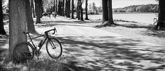In the Alley (Torsten Frank) Tags: bike bicycle deutschland alley canyon verkehr ruhrgebiet baum nordrheinwestfalen fahrrad weg allee radweg rtf rennrad radfahren radsport olfen laubbaum wirtschaftsweg ultimatecfslx