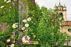 (AirSonka) Tags: flowers green film church analog 35mm pentax doubleexposure bulgaria analogue pentaxmz7 pelcula filmphotography pellicule kodakgold200 lovech airsonka doppelbelichtung    lovetch  soniakaniss