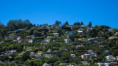 Sausalito Hills (Garden State Hiker) Tags: sanfrancisco california nature northerncalifornia outdoors marincounty sanfranciscobay sausalito summeroutdoors