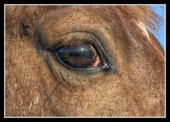 A wide world (patrick.verstappen) Tags: horse eye photo google nikon flickr belgium sigma p limburg facebook picassa gingelom d7100