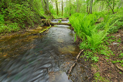 Nature wakes up (Lauri Leesmaa) Tags: fern green landscape spring stream estonia l lauri 1740 6d trisalu leesmaa