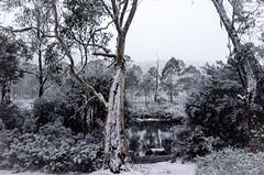 Paul Brandon Overland 2016 (9 of 140) (Paul Brandon  Rambling House Photography) Tags: mountain snow mountains walking nikon rainforest hiking australia tasmania cradle iphone
