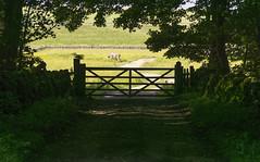 Cow & Gate (l4ts) Tags: landscape cow gate derbyshire peakdistrict sheldon whitepeak hardrake britnatparks hardrakeplantations