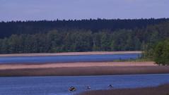 Lake Wigry / Jezioro Wigry (dochtuir) Tags: park las lake forest spring national wiosna wigry jezioro narodowy