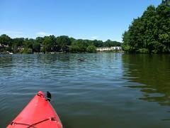 Kayaking Towards a Loon on Lake Thoreau (procktheboat) Tags: lakethoreau loon restonva restonvirginia