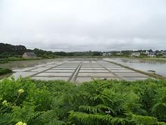 Saline au Marais de Kervilhen (mchub) Tags: nature bretagne marais saline morbihan hx400v