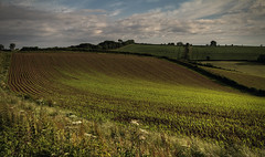 The glow (Ollie_57.. on/off) Tags: uk trees light shadow summer england sky nature june clouds rural canon landscape countryside flora glow ngc devon 7d fields crops hdr slope 2016 shaldon ef24105mm ollie57 affinityphoto