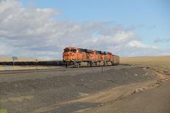 BNSF GE ES44AC #5981 #5976 #5790 (busdude) Tags: train railway coal ge hopper bnsf 5790 5976 5981 bnsfrailway es44ac