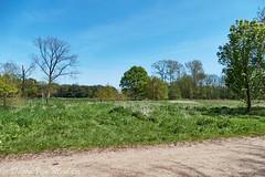 Landschap in Meerhout - Landscape in Meerhout (desire van meulder) Tags: landscape belgium antwerpen landschap meerhout