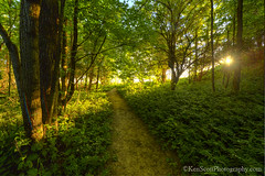 Trail ... to bliss (Ken Scott) Tags: summer usa june woods michigan lakemichigan greatlakes trail sunburst sunbeam hdr freshwater voted leelanau 2016 45thparallel treatfarm sbdnl sleepingbeardunenationallakeshore mostbeautifulplaceinamerica kenscottphotography kenscottphotographycom