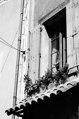 (Marine) Tags: bw france window monochrome village aude  southoffrance  southernfrance suddelafrance     sallledaude