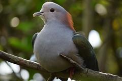 @ Burgers' Zoo 20-04-2016 (Maxime de Boer) Tags: bird vogel burgers zoo arnhem animals dieren dierentuin